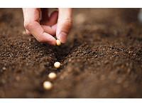 Programa Sementes Banrisul incentiva cultivo ecológico no município de Vale Verde
