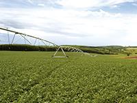 EXPODIRETO 2018 - Banrisul destaca linhas de crédito para irrigação e estocagem