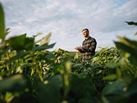 Banrisul disponibiliza crédito rural para investimentos no agronegócio